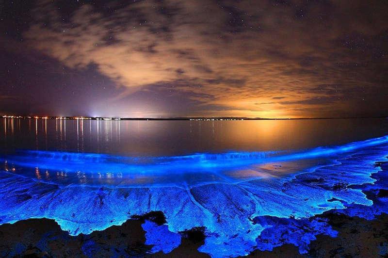 "Image result for bioluminiscencia nasa"""