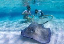 Nadar con mantarrayas